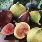 Kultured Karaite – Figs in the Tanakh