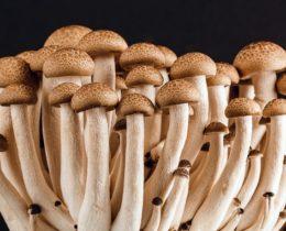 mushroom-389421_1280-678x381